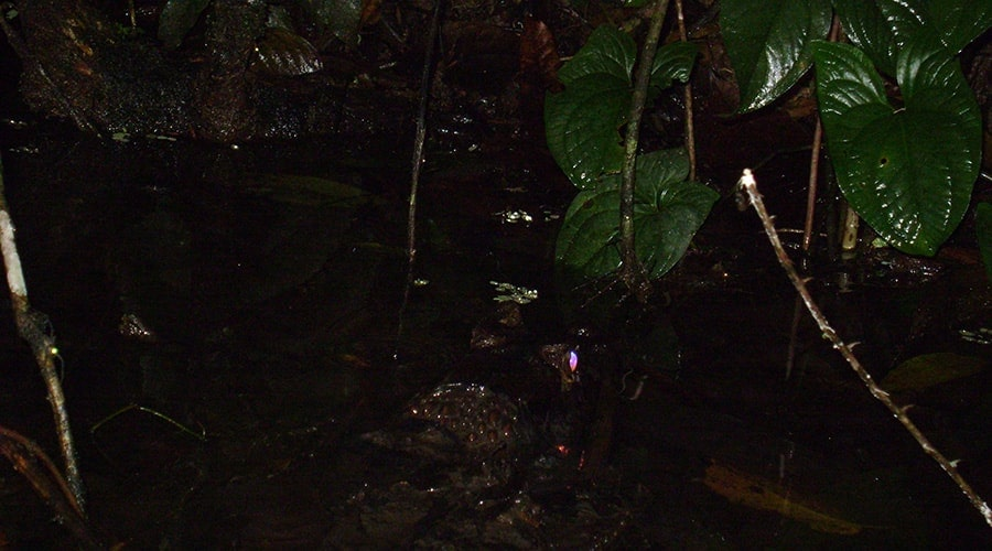 Explore The Jungle at Night
